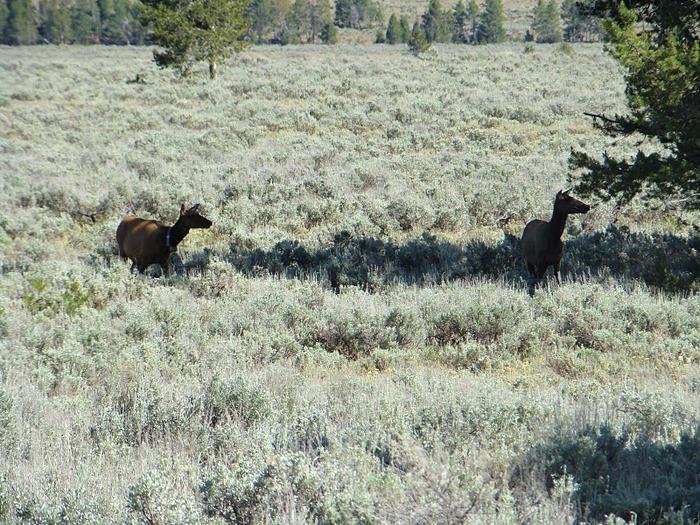 Национальный парк - Гранд Тетон 66752