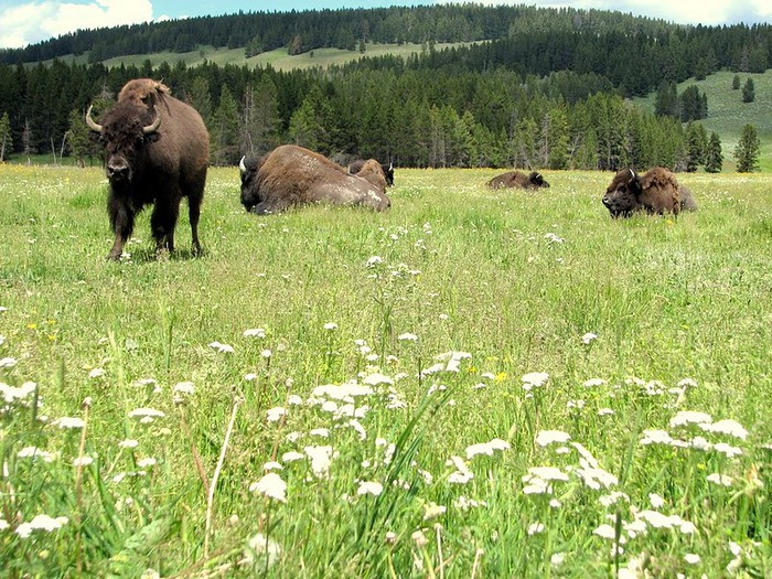 Национальный парк - Гранд Тетон 79989