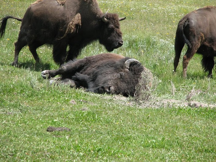 Национальный парк - Гранд Тетон 87150