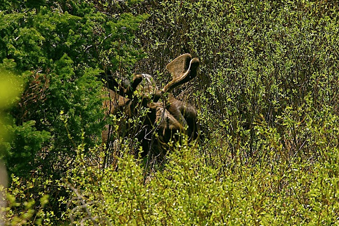 Национальный парк - Гранд Тетон 11568