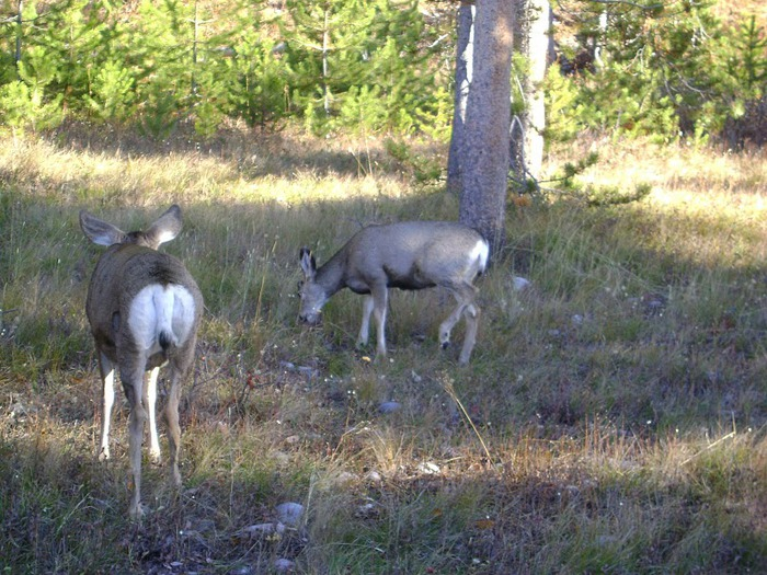 Национальный парк - Гранд Тетон 22176