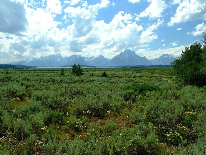 Национальный парк - Гранд Тетон 77315
