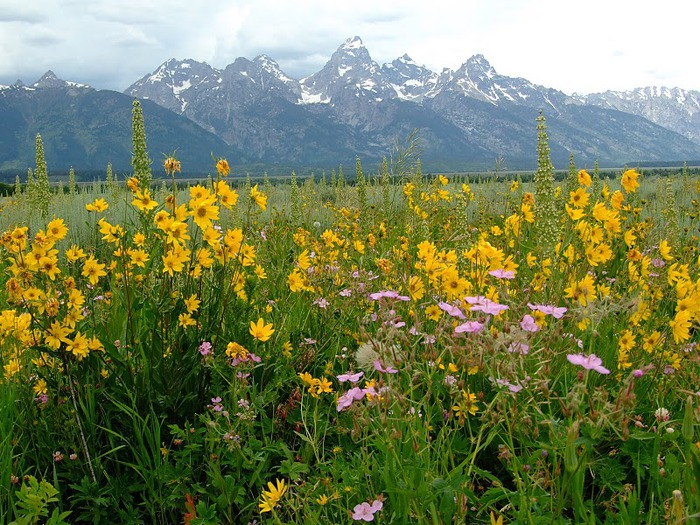 Национальный парк - Гранд Тетон 31192
