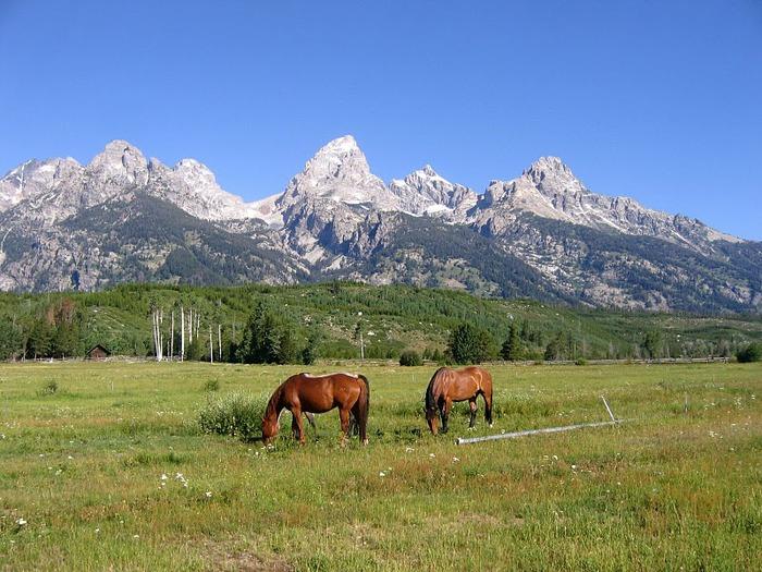Национальный парк - Гранд Тетон 74474