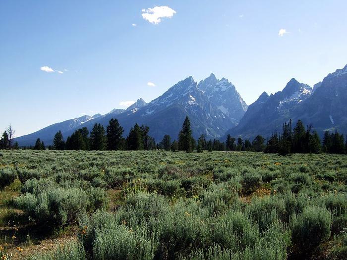 Национальный парк - Гранд Тетон 90841