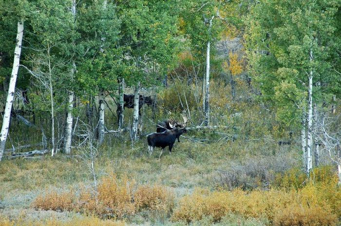 Национальный парк - Гранд Тетон 59476