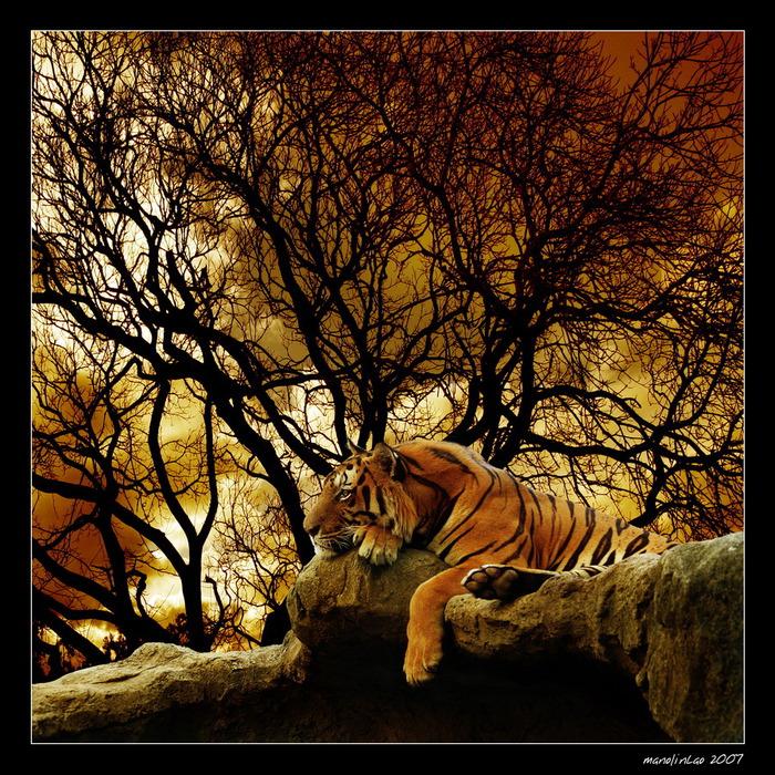 Работы фотографа Мануэля Лао (Manuel Lао)
