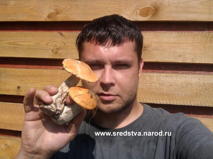 грибной сезон, открытие грибного сезона, грибы подмосковья, самая большая грибница, подберезовик, подосиновик, белый гриб, шампиньен, грибы весной, весенние грибы, первые грибы, мой первый гриб, sredstva