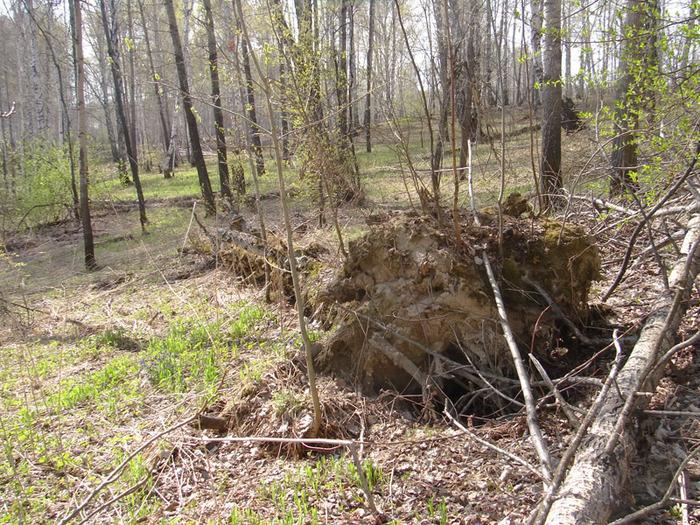 Дерево вырванное с корнем