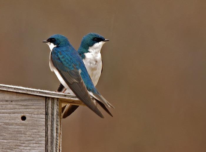 Звуки птиц для детей скачать бесплатно