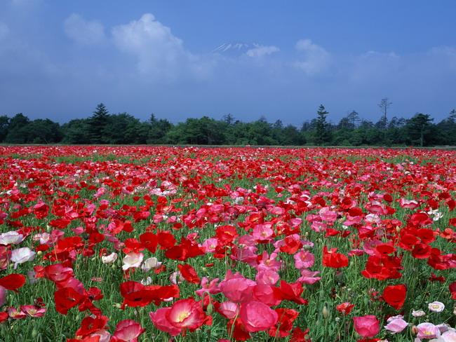 Япония: священная гора Фудзияма 62366