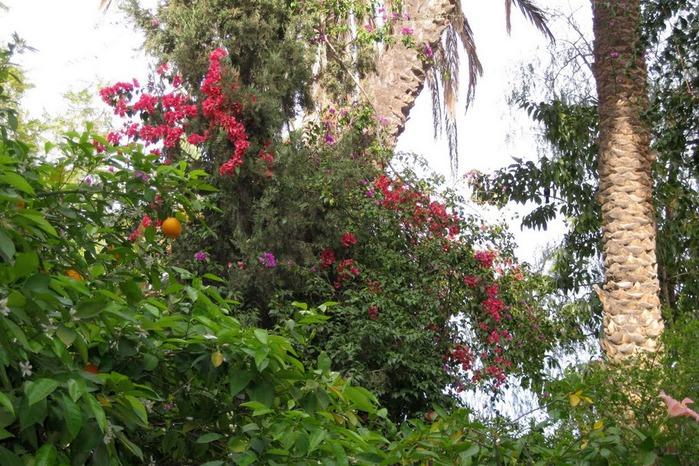PALAIS DE LA BAHIA / ДВОРЕЦ БАХИЯ (Маракеш) 89401