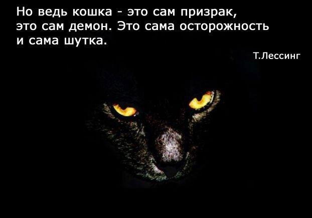 с днем рождения...Черная кошка 59073905_1273937785_682fd81f61f8