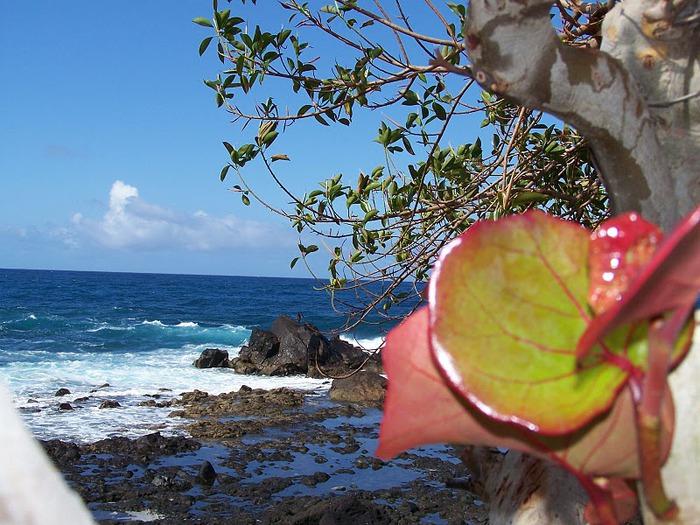 «Волшебный остров» — маленький остров Гомера 44952