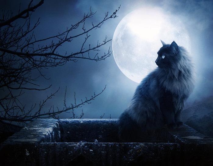 Картинка кот и луна