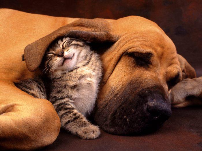 ~кошки | Записи в рубрике ~кошки | Дневник Анны : LiveInternet - Российский...
