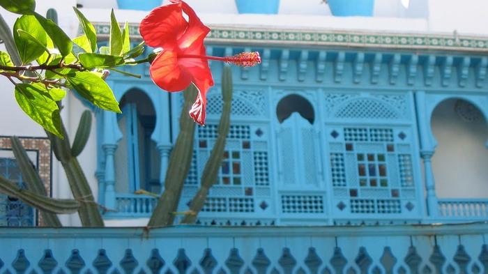 Тунис. Синий город - Sidi Bou Said 32044
