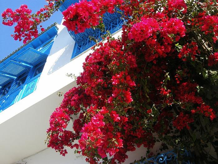 Тунис. Синий город - Sidi Bou Said 53363