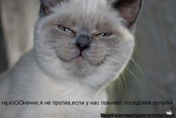 Котоматриця!)))) - Страница 3 60248108_1273841708_kotomatrix_41