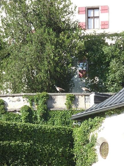 дворец Амбрас (Castle Ambras) 89122