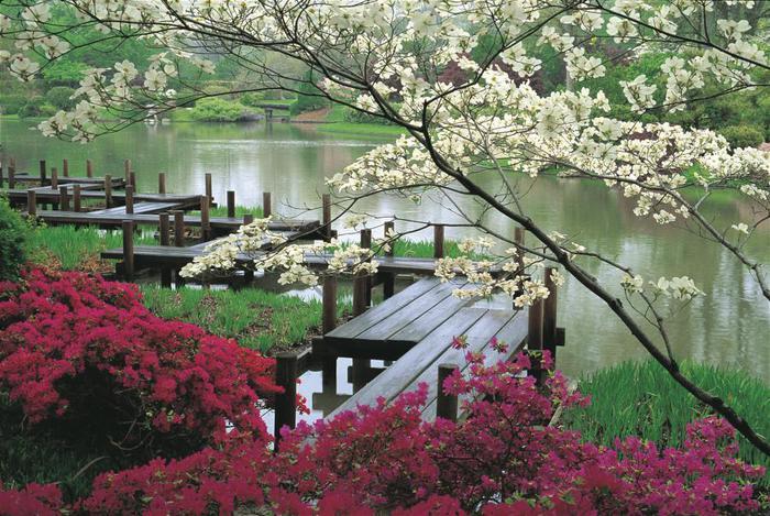 Цветущие сады японии