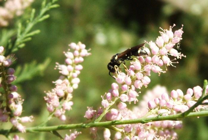 муха на цветах
