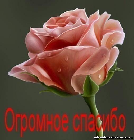 60432560_995197921 (507x533, 24 Kb)
