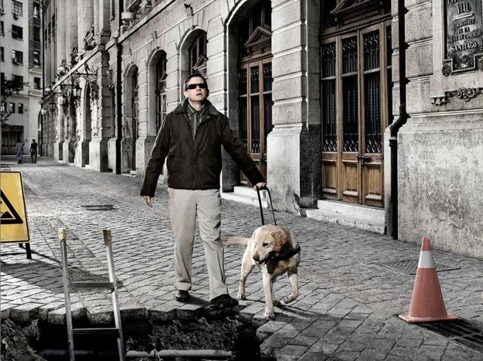 Собаки предатели (4 фото)