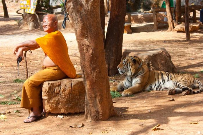 Тигровый храм (Tiger Temple) 42446