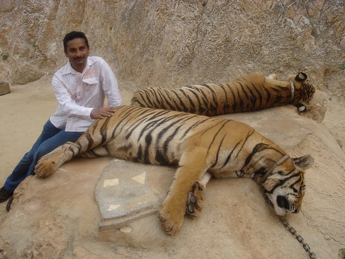 Тигровый храм (Tiger Temple) 92194