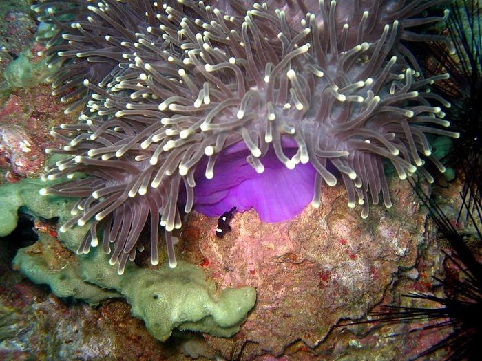 Тайланд - Острова Пи Пи--Phi Phi Islands 79773