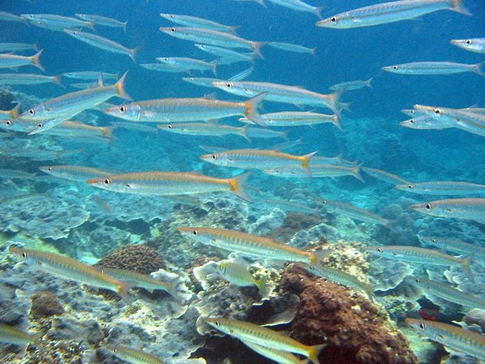 Тайланд - Острова Пи Пи--Phi Phi Islands 65545