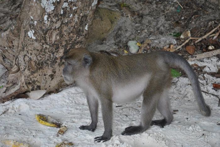 Тайланд - Острова Пи Пи--Phi Phi Islands 58762