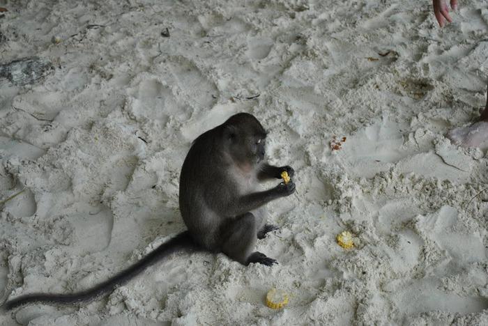 Тайланд - Острова Пи Пи--Phi Phi Islands 56829