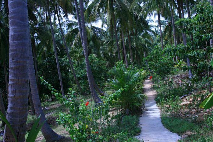 Тайланд - Острова Пи Пи--Phi Phi Islands 12594