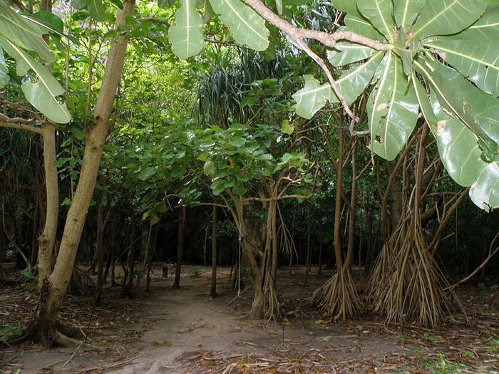 Тайланд - Острова Пи Пи--Phi Phi Islands 83592
