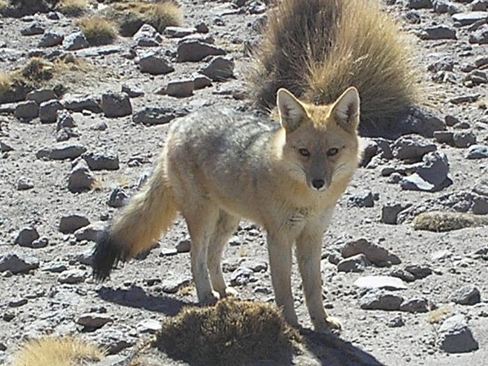 Солончак Уюни - Salar de Uyuni - Боливия 11620