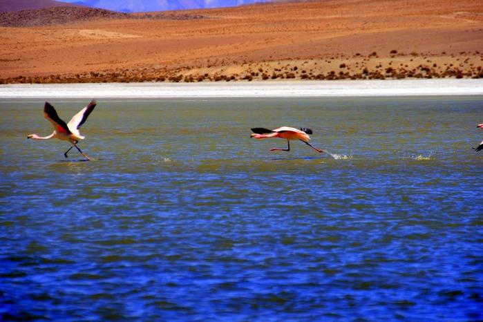 Солончак Уюни - Salar de Uyuni - Боливия 64315