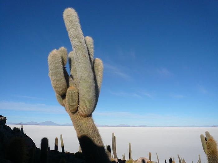 Солончак Уюни - Salar de Uyuni - Боливия 64867