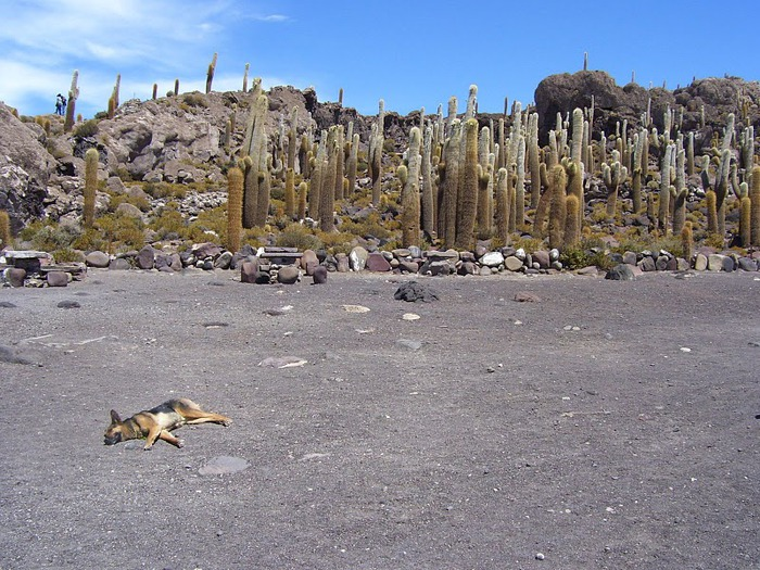 Солончак Уюни - Salar de Uyuni - Боливия 37334