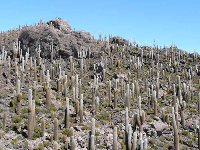 Солончак Уюни - Salar de Uyuni - Боливия 36827