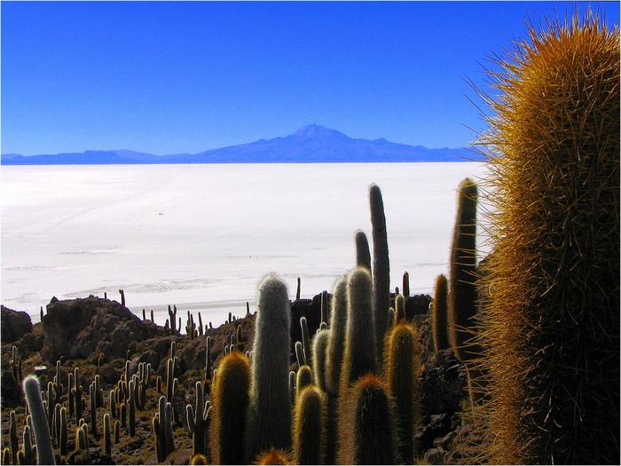 Солончак Уюни - Salar de Uyuni - Боливия 93173