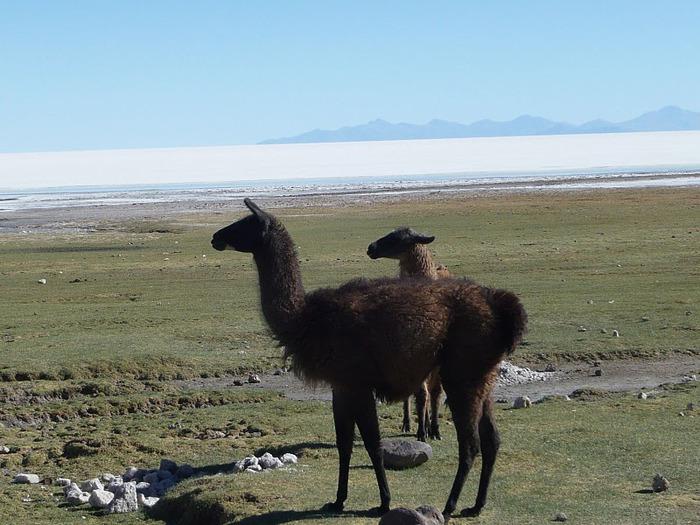 Солончак Уюни - Salar de Uyuni - Боливия 40533
