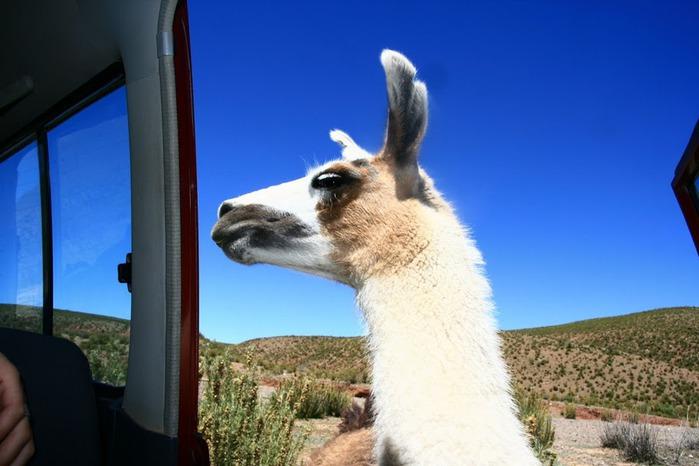 Солончак Уюни - Salar de Uyuni - Боливия 57107