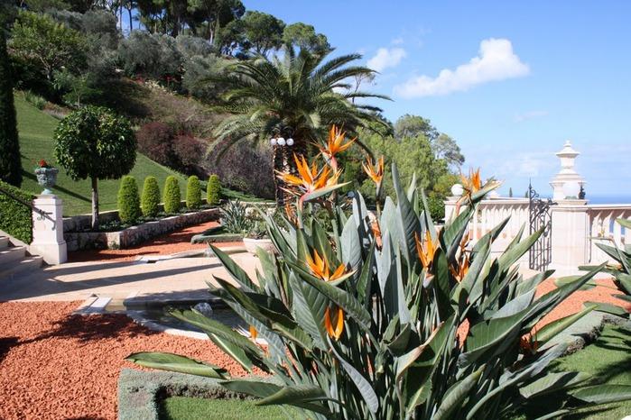 Хайфа, Бахайские сады 40541