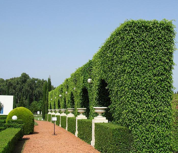 Хайфа, Бахайские сады 21091