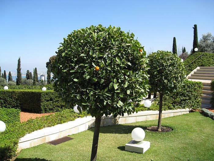 Хайфа, Бахайские сады 10880