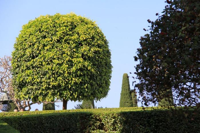 Хайфа, Бахайские сады 61589