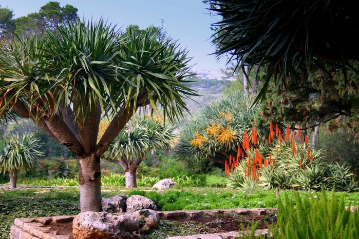 Хайфа, Бахайские сады 14434