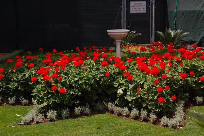 Хайфа, Бахайские сады 46468